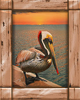Puntagorda pelican1 by John Breen