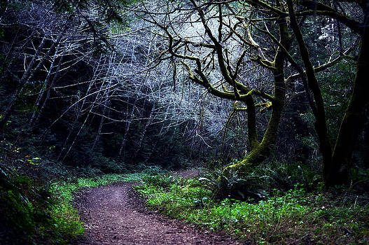 Matt Hanson - Purisima Creek Trail