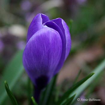 Anne Babineau - purple