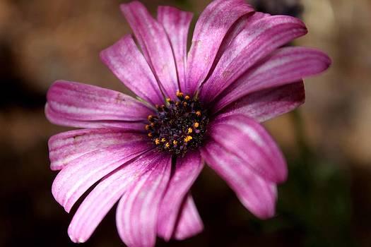 Purple by Bella  Shots
