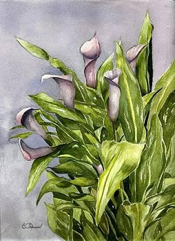 Purple Callas by Constance Larimer