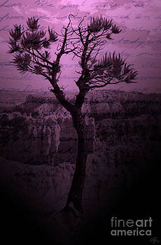 Purple Chasm by Crystal June Norton