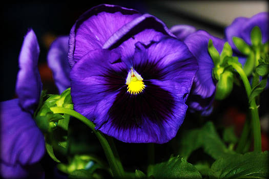 Purple Flower by Melissa Richter