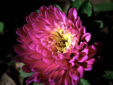 Sumit Mehndiratta - Purple flower