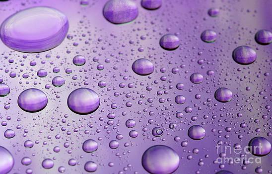Purple Polka-Dots by Casey Hanson