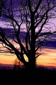 Purple Sunset 2 by Esther Luna