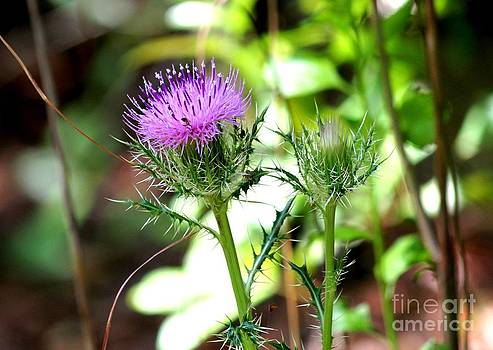 Purple Thistle Blossom by Theresa Willingham