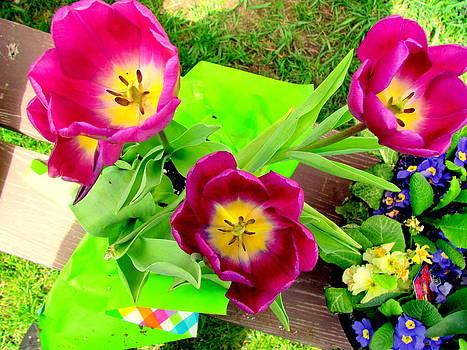 Purple Tulips by Amy Bradley