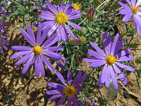 Purple wildflowers by Margaret  Slaugh