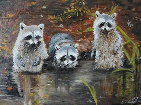 Raccoons by Sergey Selivanov