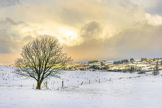 Radiant Sun by Kim Shatwell-Irishphotographer