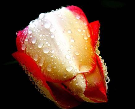 Rain by Bella  Shots