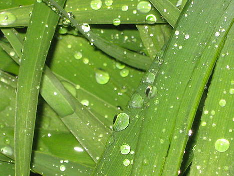 Rain Drops by Lisa  Bahns