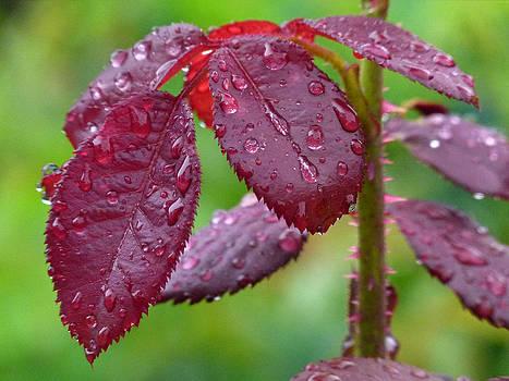 Juergen Roth - Rain Soaked