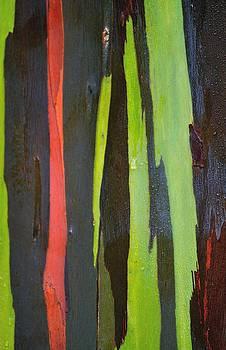 Rainbow Eucalyptus by Jose Diogo