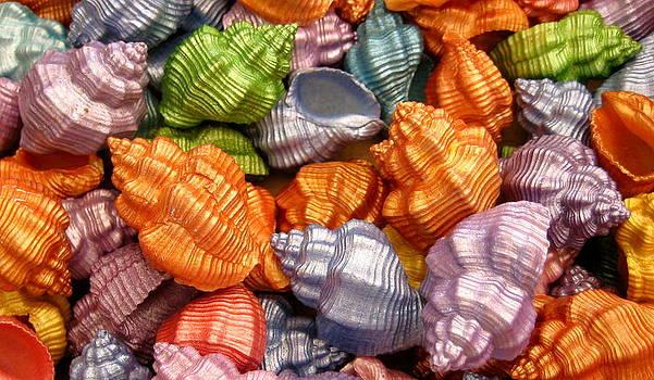 Rainbow of Sea Shells by Rhonda Jones