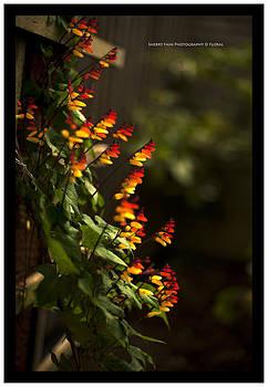 Rainbow by Sherry Fain