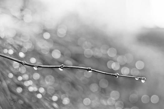 Raindrops keep falling... by Shari Whittaker