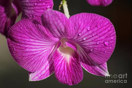 Raindrops on Orchids by Theresa Willingham