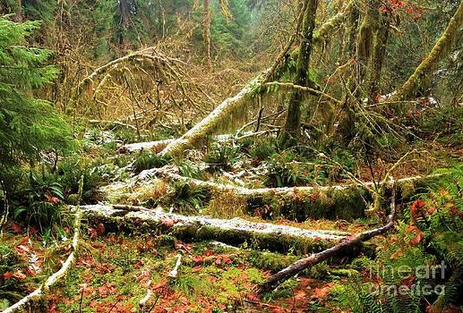 Adam Jewell - Rainforest Dusting