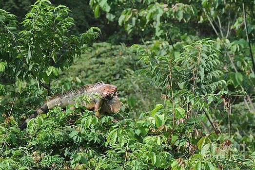 Rainforest Majesty by JD Photography