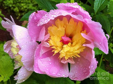Rainy Day 2 by Caroline Ferrante