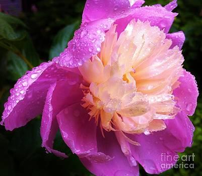 Rainy Day 3 by Caroline Ferrante