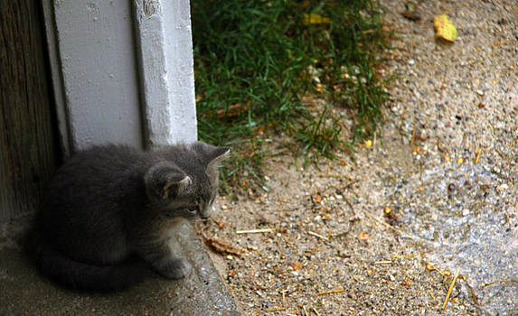 LeeAnn McLaneGoetz McLaneGoetzStudioLLCcom - Rainy Day Kitten