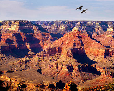 Ravens Over Canyon by David Yunker