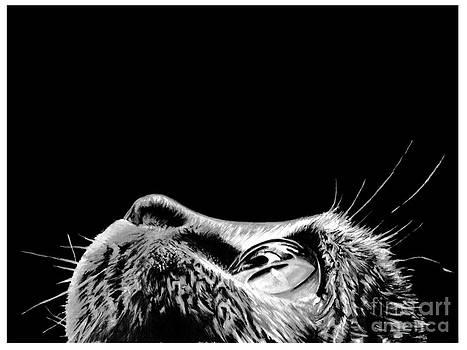 Realistic Cat Drawing Painting by Debbie Engel