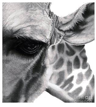 Realistic Pencil Drawing of a Giraffe Original Pencil Drawing by Debbie Engel