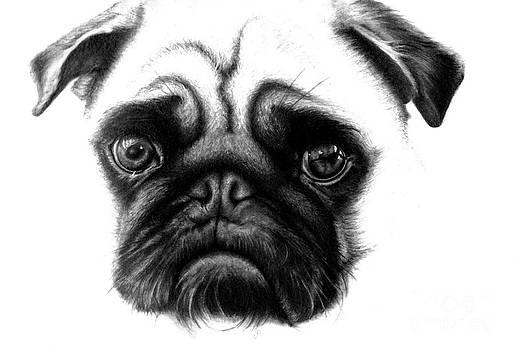 Realistic Pencil Drawing of a Pug Dog  by Debbie Engel