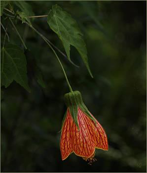 Red Bell Flower by Barbara Middleton