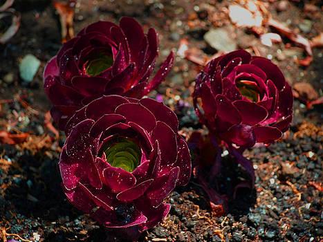 Debi Ling - red cactus