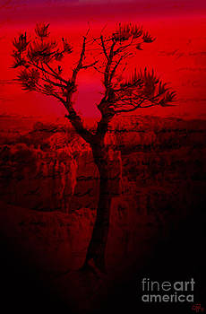 Red Chasm by Crystal June Norton