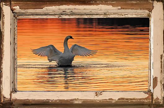 Randall Branham - Red Dawn Swan framed in old window frame