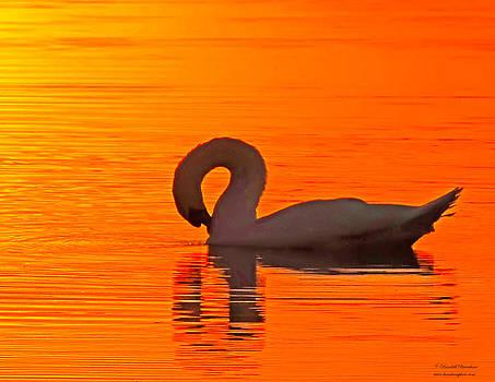 Randall Branham - RED DAWN SWAN