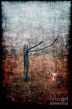 Dan Friend - Red fox under tree