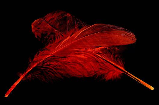 Steve Purnell - Red Ghost on Black
