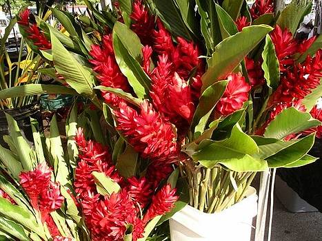 Red Ginger Blooms by Monica Cranswick