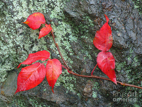 Juergen Roth - Red Leaves