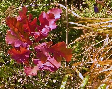 Red oak sapling by Vicky Mowrer