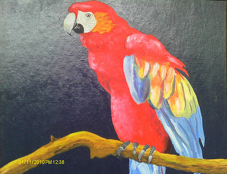 Red Parrot by Juliet Nidhan