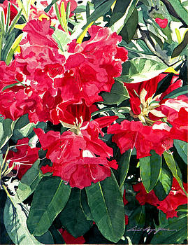 David Lloyd Glover - Red Rhododendrons of Dundarave