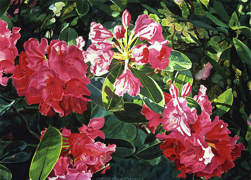 David Lloyd Glover - Red Rhodos