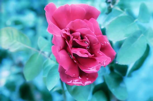 Debi Ling - Red Rose