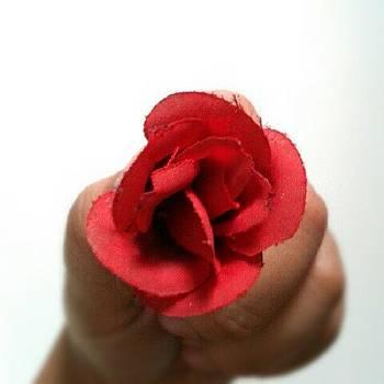Red Rose by Ivan Braginski