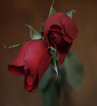 Red Roses by Joan Powell