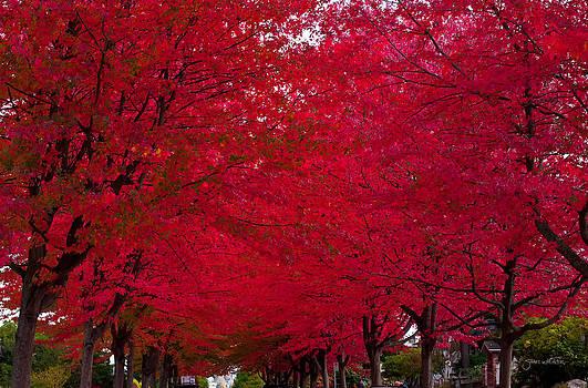 Red by Shari Whittaker