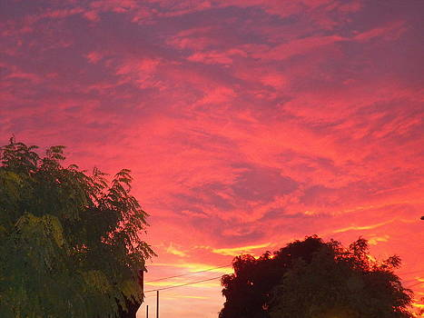 Red Sky at Night Shepherds Delight by Ronald Osborne